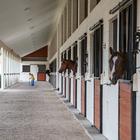 horsestables