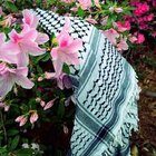 فلسطينيه