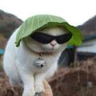 ϟ thunder dumpling ϟ