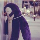Penguin Pit
