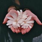Sama_xxl