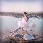 Plume_de_danseuse