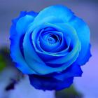 Mystic_Rose