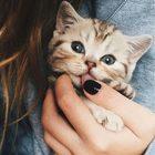 CutePrinces