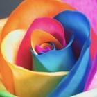 rainbowscolor