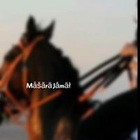 masara_jamal1211344