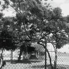reynaisabel2806