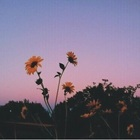sunsetsndpoetry