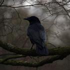 Raven_In_The_Dark