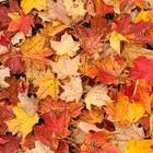 automneautumn