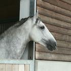 horse_fangirl_1812