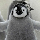 #Penguine