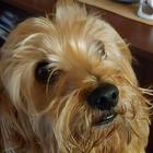 DogFashion