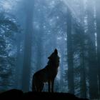 wolfgirl0512