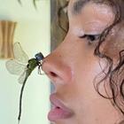 bug !
