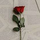 inlovewithwords   poetry