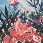 Floralmisty