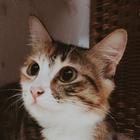 Tsara Ismail