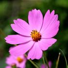 Flowers 🌸🌹🌻💐