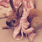 The Victorian Rabbit