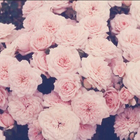 blossomx