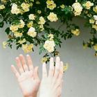 rozenostalgie
