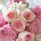 Oreana Grace Córdova Vargas
