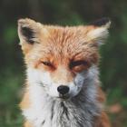 Maria Fox