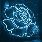 Rose ♡