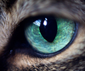 eye and cat image