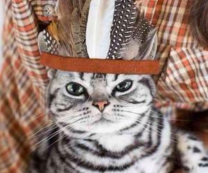 cat, scottish fold, and wtf image