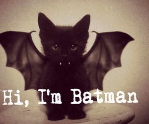 animals, batman, and quotes image
