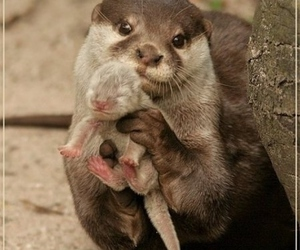 :D and otter image