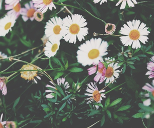 floral, flowers, and pastel image