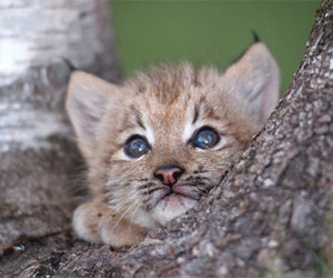 aw, cute animals, and nature image