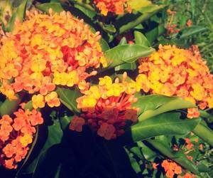 flower, flor, and flowers image