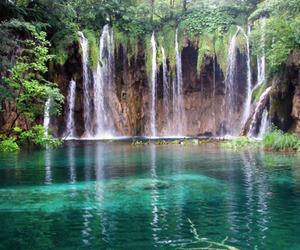 beautiful, environment, and nature image