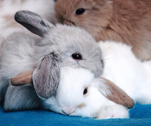 bunny, fairytales, and enchanted image