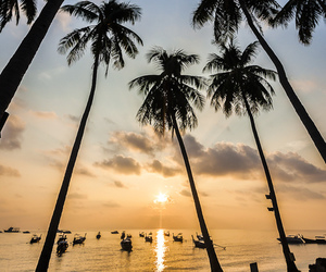 beach, holidays, and palm trees image