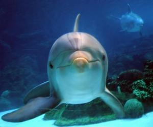 blue, delfin, and cute image