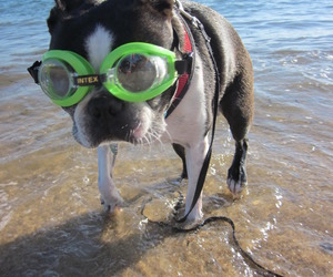 dog, goggles, and water image