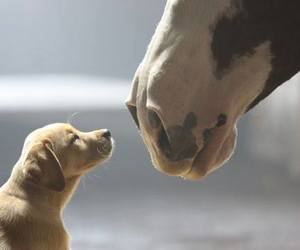 dog, horse, and puppy image