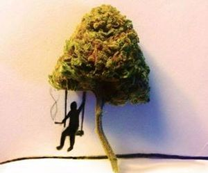 weed, tree, and drugs image