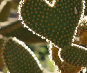 cactus, heart, and spikes image