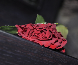 red, rose, and ورد image
