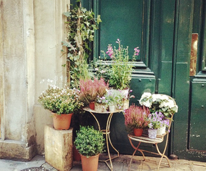 flowers, france, and london image