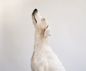 dog, animal, and white image