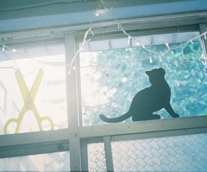 cat, Olympus, and solaris400 image