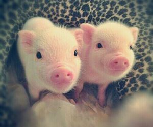 adorable, tiny, and piglets image