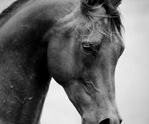 horse, beauty, and black image